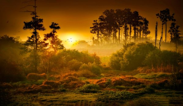 landscape-photo-of-forest-2055389.jpg