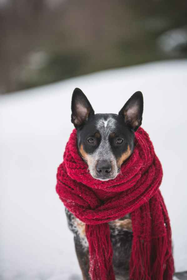 dog wearing crochet scarf with fringe while sitting on snow selective focus photography