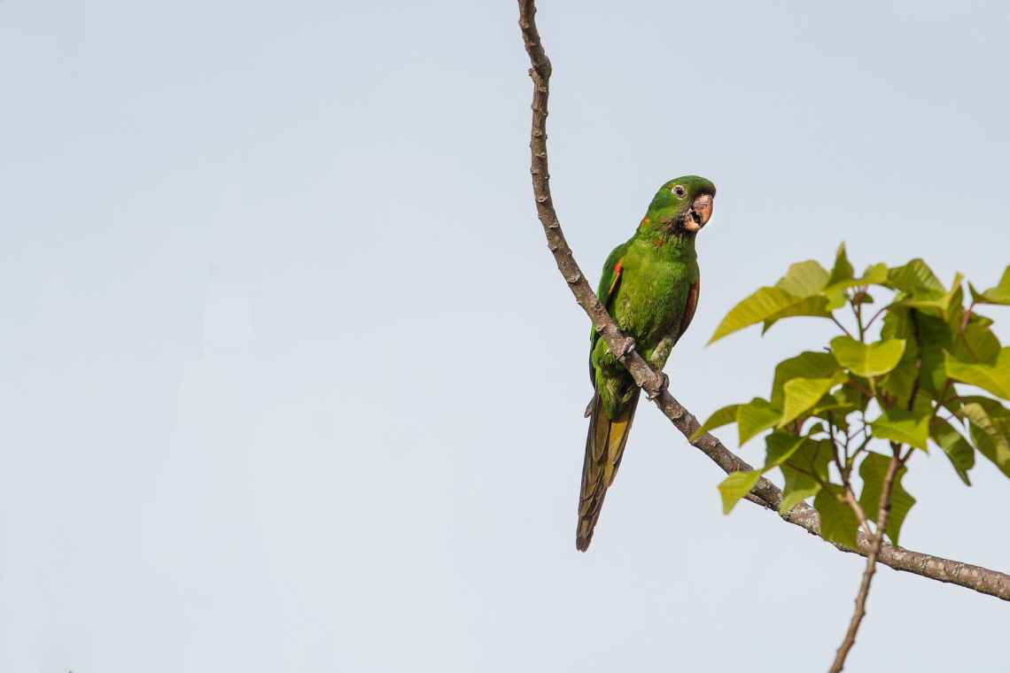 green parrot perched on branch